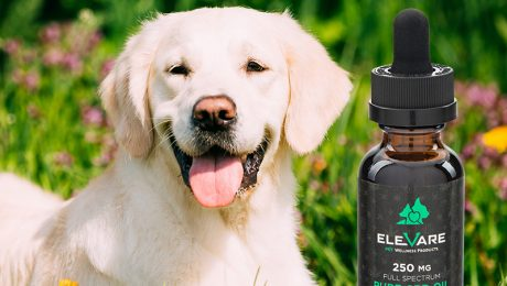 elevare pet tincture and white dog laying down